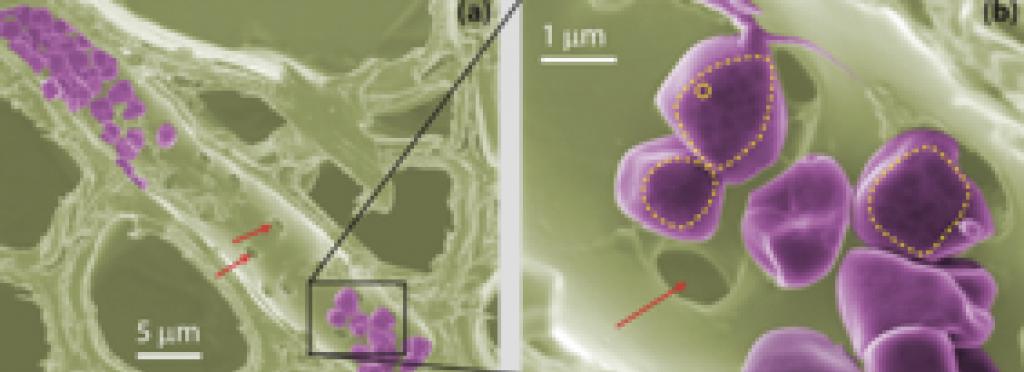 Nanomechanics of plants