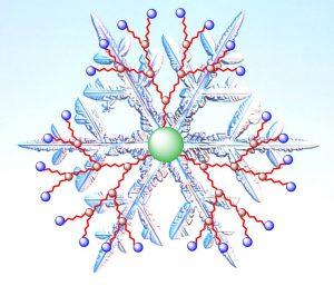 Les dendrimères, des nano-molécules pour le transport de médicaments